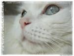 Chat Léo -   (0 mois)