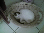 Chat chat de goutières -   (0 mois)