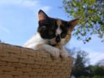 Chat Chat de goutière, Hamstérix -   (0 mois)