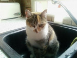 Chat Maya chat de gouttière -   (0 mois)