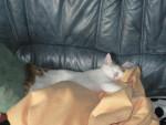 Chat roukmout en plein sommeil -   (0 mois)