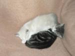 Chat ils sont mignons les chatons -   (0 mois)