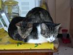 Chat kikine et tit bébé -   (0 mois)