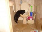 Chat noir MISTER JINGLE -   (0 mois)
