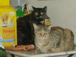 Chat fifi et pupuce chats de gouttiere -   (0 mois)