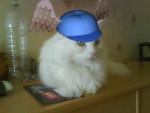 Chat Photo 149.jpg -   (0 mois)
