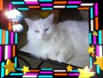 Chat Photo 153.jpg -   (0 mois)