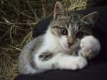 Chat Nivéa -   (0 mois)