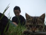Chat Ikéa -   (0 mois)