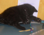 Chat lilou bébé -   (0 mois)
