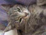 Chat chat de gouttiere -   (0 mois)