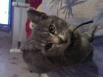 Chat SP_A0034.jpg -   (0 mois)