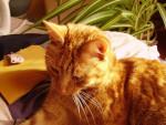 Chat chat de goutière - OASIS dit TAZOU -   (0 mois)