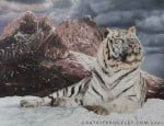 Chat tigre blanc -   (0 mois)