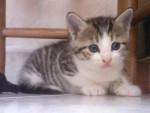 Chat chat de goutière crispies -   (0 mois)