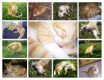 Chat Tigrou -   (0 mois)
