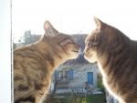 Chat catch et tango -   (0 mois)