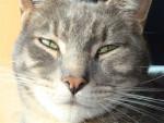 Chat catch fait les yeux doux -   (0 mois)