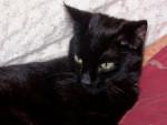 Chat chat de gouttière Mimine -   (0 mois)
