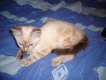 Chat Charly (chat de gouttiere) -   (0 mois)