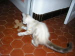 Chat charly -   (0 mois)