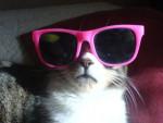 Chat hibou -   (0 mois)
