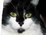 Chat Praline -   (0 mois)