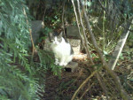 Chat TANIA -   (0 mois)