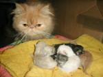 Chat canel et c\'est bébé -   (0 mois)