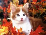 Chat petit chaton dans les feuilles -   (0 mois)