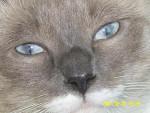 Chat les yeux de Léa -   (0 mois)