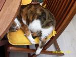 Chat Zoé à la sieste -   (0 mois)