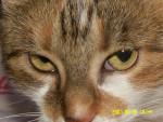 Chat Les yeux de Zoé  -   (0 mois)