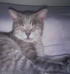 Chat gouttière  Mimine -   (0 mois)