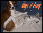 Chat doucy et diego  -   (0 mois)