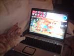 Chat hermés -   (0 mois)