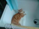 Chat hermes adore passé aprés moi dans le bain -   (0 mois)