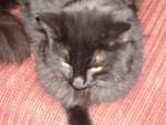 Chat Papinouche  6 ans  -   (6 ans)