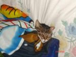 Chat Minou chat de gouttiere -   (0 mois)