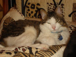 Chat VOYOU -   (0 mois)