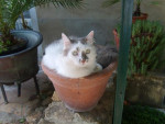 Chat Milord -   (0 mois)