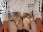Chat tomy et justice -   ()