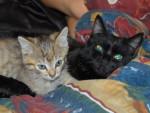 Chat Yuna et Rikku...minettes de gouttieres -   (0 mois)