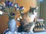 Chat Mimine, chatte de gouttière -   (0 mois)