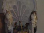 Chat tigro et petule -   (0 mois)