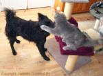 Chat Kaerenn  chatte sans race -   (0 mois)