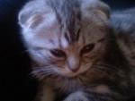 Chat Mizu, enfin un beau portrait :) -   (0 mois)