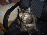 Chat channa -   (0 mois)