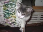 Chat nunuche -   (0 mois)
