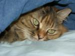 Chat Chloé, 4 ans et demi -   (4 ans et 6 mois)